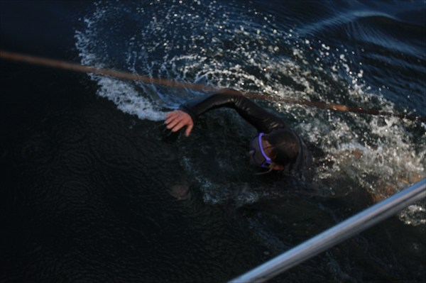 Заплыв в Тихом океане