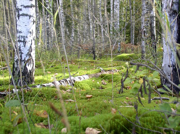 подножье леса