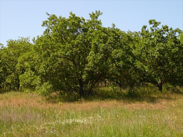 Дубовый лес