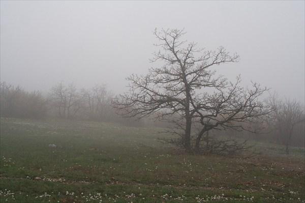 Туман на Караби.