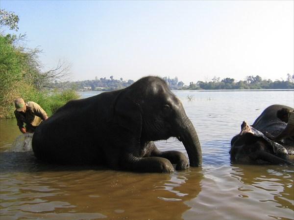 Купание слона