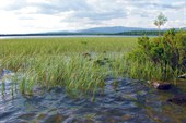 Капустные озёра