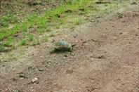 Если дорогу вам перебежала черепаха, идите быстрее