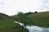 ивовая роща у устья ручья Колнабук