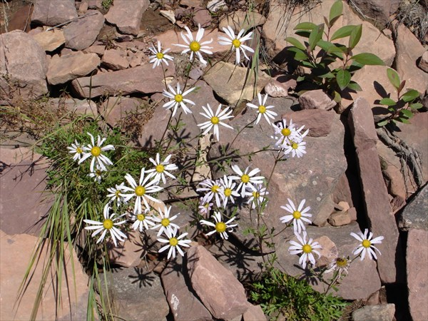 Цветы Якутии
