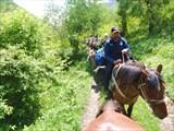 Домой вези меня лошадка)