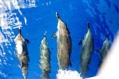 дельфины редкость в Дахабе
