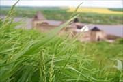 Хотын в траве
