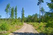 Дорога от старого участка `Скандинавии` в сторону моста