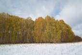 Лес еще сентябрьский...