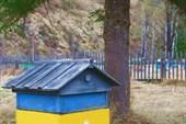 Село Чуря. Пасека