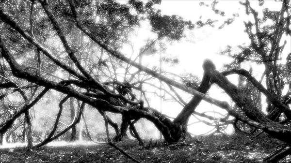 Дерево-паук