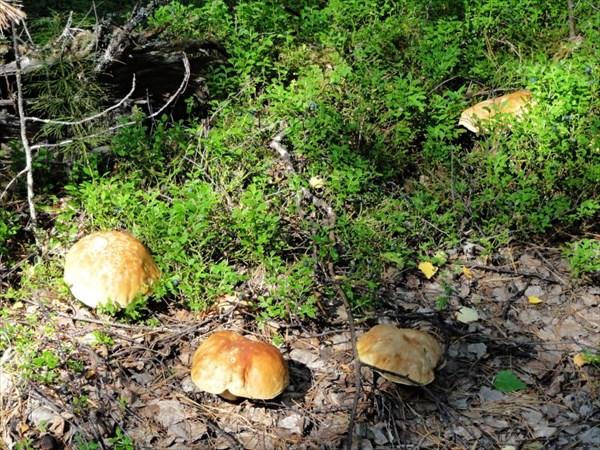 По дороге можно и грибов набрать.