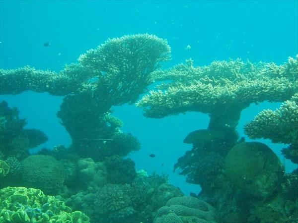 114-Кораллы