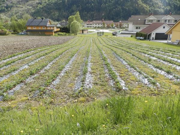 Сельское хозяйство в Loen