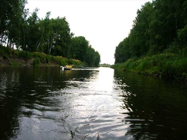 15 июля 2006г. Река Лух. Знаменитая березовая аллея.