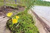Озеро Левицкое