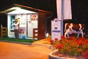 Автомат по продаже молока