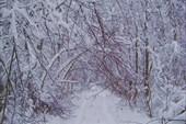 Зимний лес в Карелии