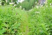 Дорога в траве.