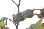 мышь и орехи