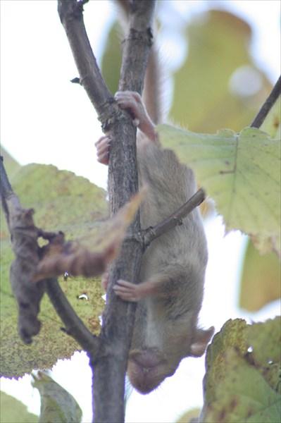 мышь на дереве