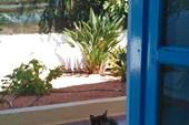 Ночью коты заходят в комнату через открытый балкон