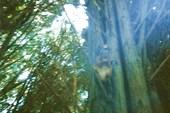 Белка в Дендрарии
