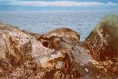 Ларга (остров Утичий)