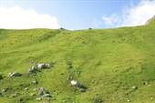 Склоны долины снова наполнились жизнью. Аборигены вернулись.