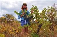В винограде