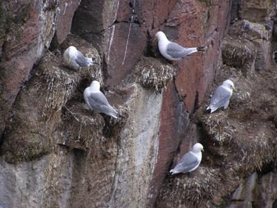Птичьи посиделки
