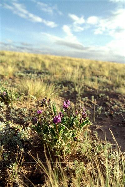 Растительность Тибетского плато