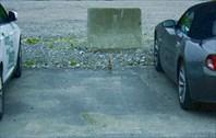 Птенец чайки на парковке