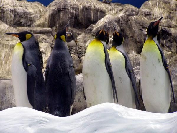 Пингвины смотрят на нас...