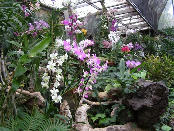 Оранжерея орхидей и олеандров