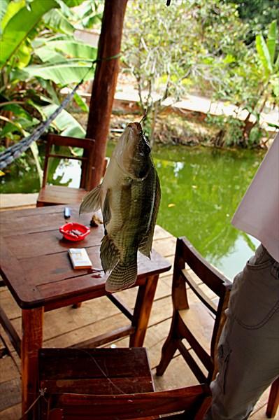 019-Рыбалка