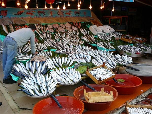 на фото: рыба