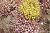 Почвопокровные растения в горах Крыма
