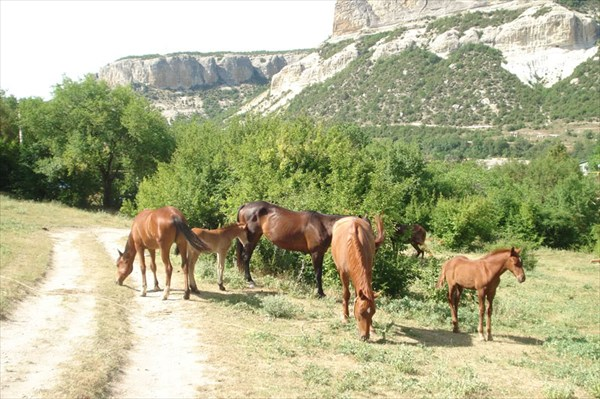 Стадо лошадей у подножья Сюйрени