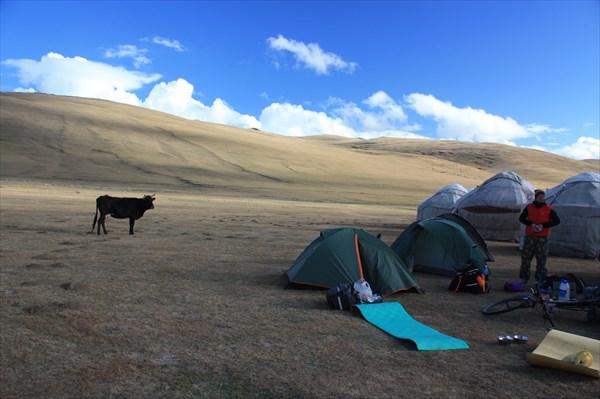 Палатки рядом с гостевыми юртами