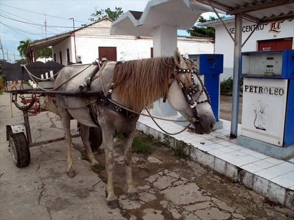 Лошадь-бензиноман