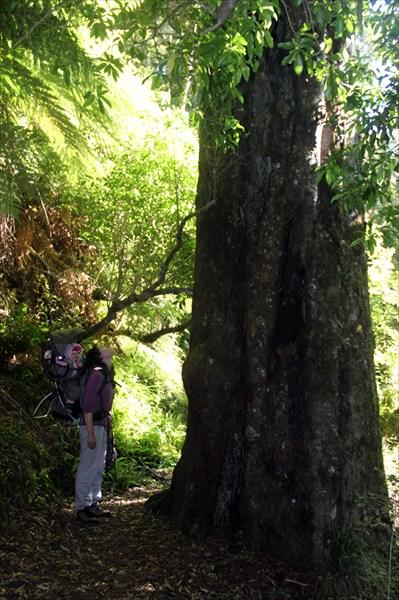 Чувствуешь себя маленьким жучком среди этих гигантских деревьев