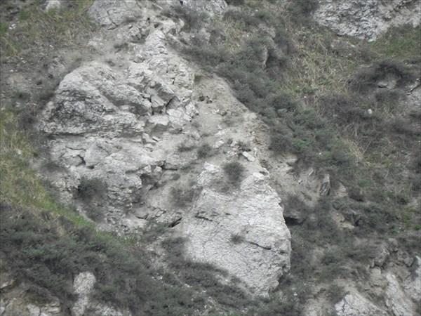 Голова барана