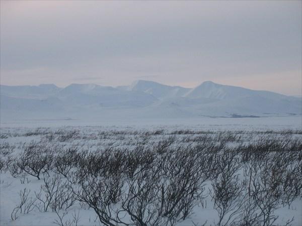 Кусты, горы, снег