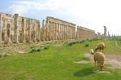 Древняя Афамия