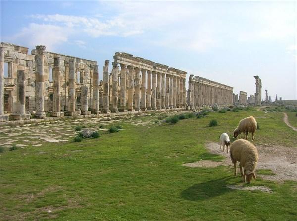 на фото: Древняя Афамия