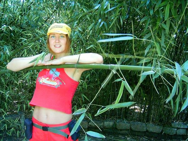 на бамбуке