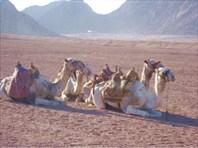 Египет - страна розовой мечты...