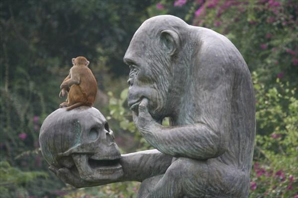 Скульптуры острова обезьян.